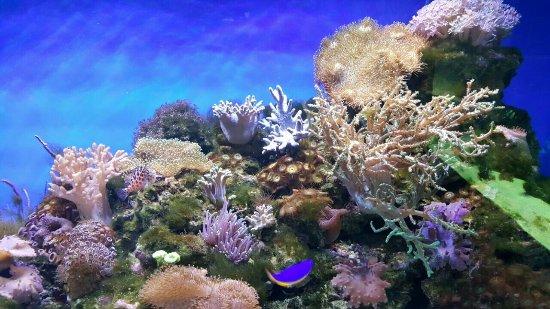 Oceanarium RIF