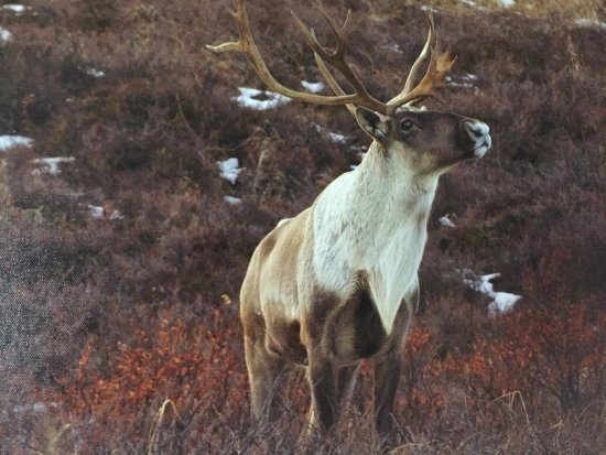 Caribou Lodge Alaska: photo9.jpg