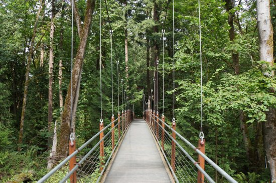 Bellevue Botanical Garden   Ravine Experience