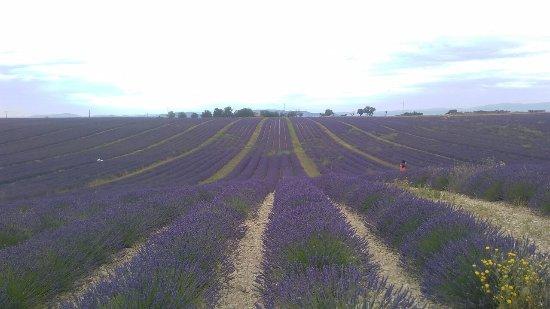 Rendez Vous Provence