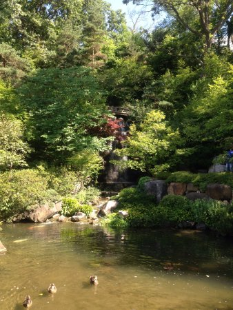 Rockford Illinois Anderson Japanese Gardens Duck Pond Picture