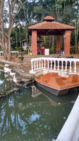Amblee Holiday Resort: a pool with geese at the entrance