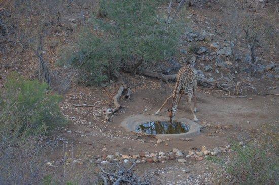 Foto de Balule Private Game Reserve