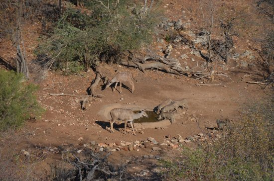 Balule Private Game Reserve, جنوب أفريقيا: Party at the water hole