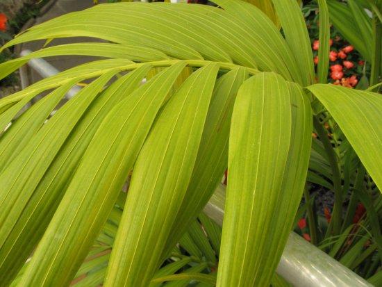 Wanganui, Nueva Zelanda: Leaf