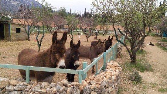 Donkey's Land