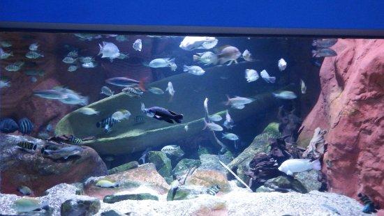 Antwerp Zoo (Dierentuin): One of the many aquariums