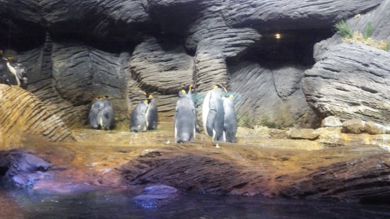 Antwerp Zoo (Dierentuin): The home of the penguins