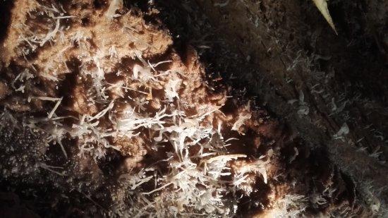 Le Buisson-de-Cadouin, Prancis: Grottes de Maxange