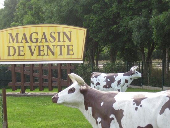Isigny-sur-Mer, Francia: les vaches
