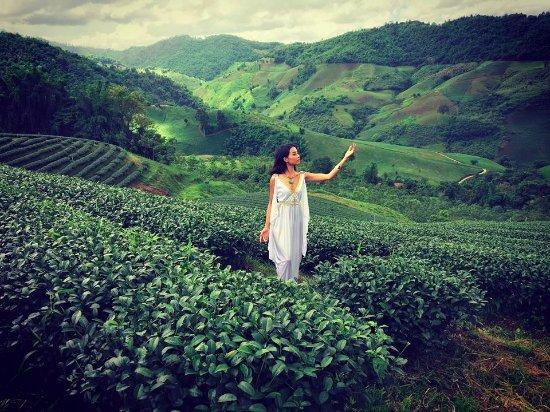 Doi Mae Salong: ไร่ชา 101 ดอยแม่สลอง.
