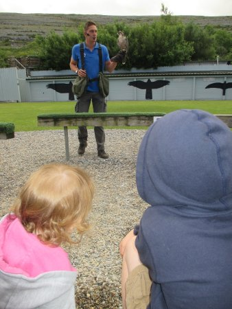 Aillwee Cave: falcon display