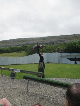 Ballyvaughan, Irlanda: eagle display