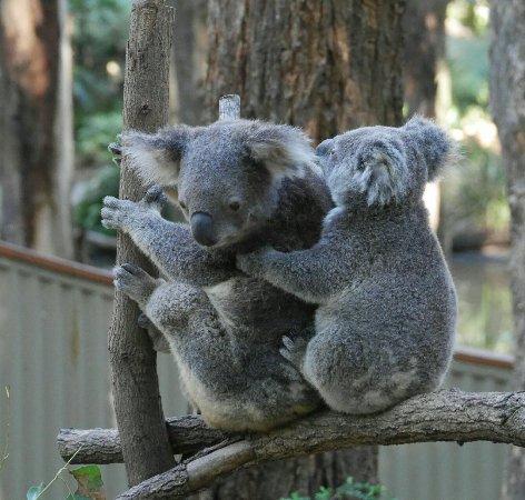 Currumbin, Australien: IMG_20160625_182552_large.jpg