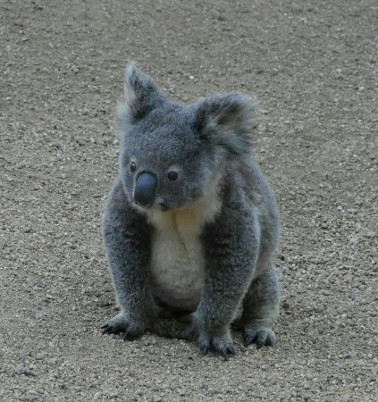 Currumbin, Australien: IMG_20160625_182501_large.jpg
