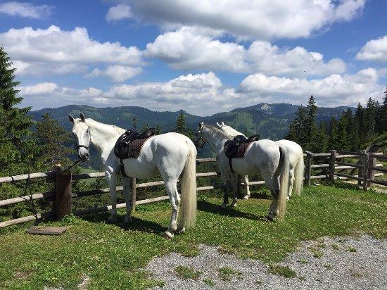 Achenkirch, Avusturya: Ausritte