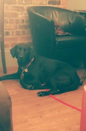 Gogerddan Arms: Dog friendly 🐶