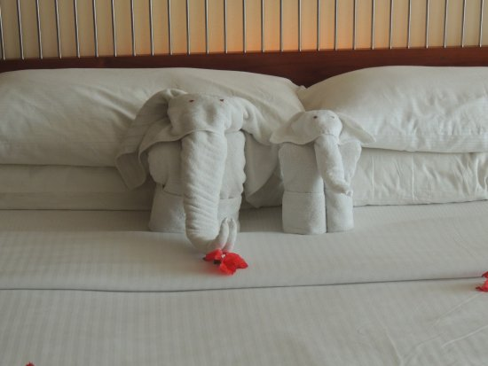 Heritance Ahungalla: Bed elephants!