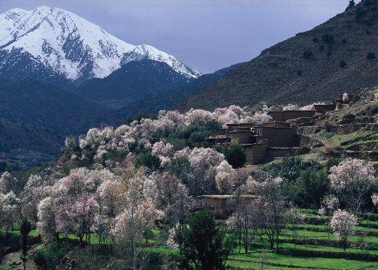 Marrakech-Tensift-El Haouz Region, Marocko: nature