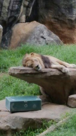 North Carolina Zoo: 20160716_121226_large.jpg
