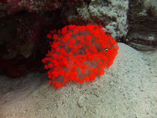 Red Sea Diving College : photo4.jpg