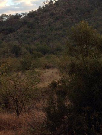 Pilanesberg National Park: rhino