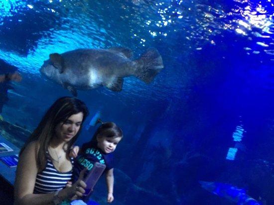 Newport Aquarium: photo0.jpg