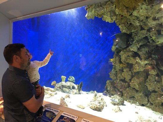 Newport Aquarium: photo1.jpg