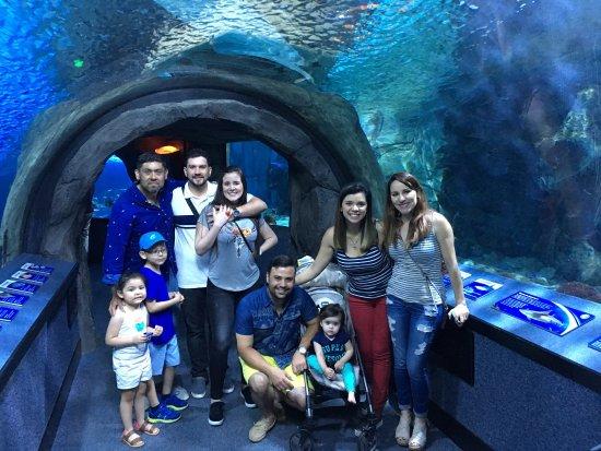 Newport Aquarium: photo2.jpg