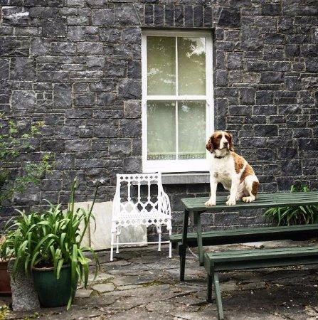 Athy, Irlanda: Außenansicht der Moate Lodge mit Hund Stevie :-)