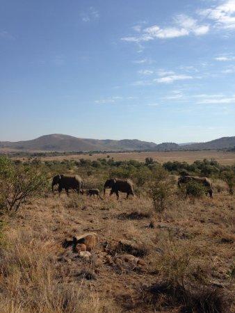 Pilanesberg National Park: cuteness