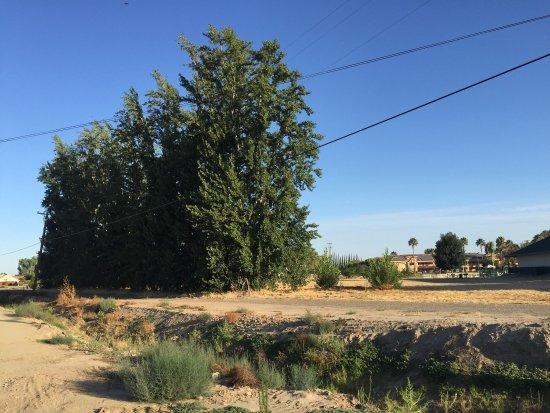 Lemoore, CA: photo0.jpg