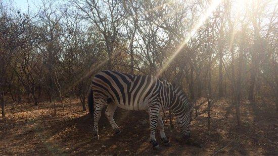 Marloth Park, Güney Afrika: photo2.jpg