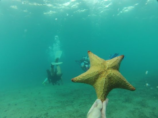 Snorkeling Picture Of Visit Palm Beach West