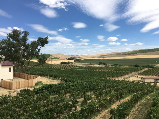 Winery Tours Walla Walla: Vineyards at a winery that was only open by appointment