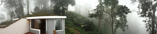 The Tall Trees Munnar: A pano view from my balcony