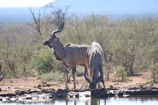 Madikwe Game Reserve ภาพ
