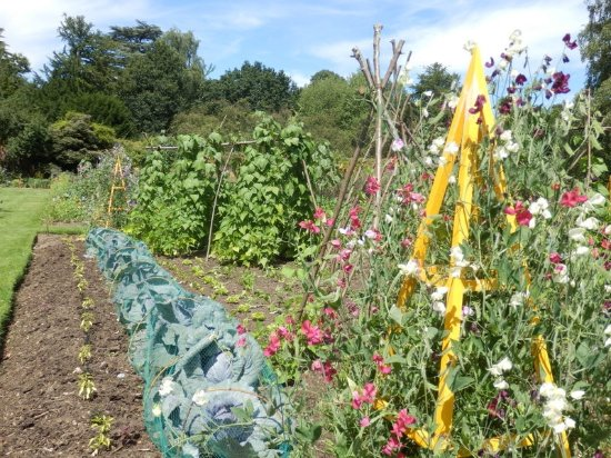 Isleworth, UK: Vegetable Garden