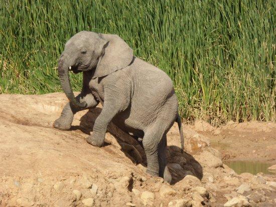Gorah Elephant Camp: photo7.jpg