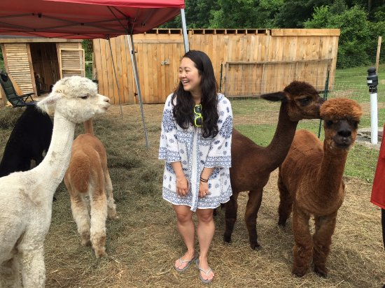 Vermont Alpaca Store & Living the Dream Alpaca Farm