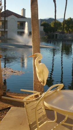 Desert Breezes Resort: Heron on our patio in the morning...