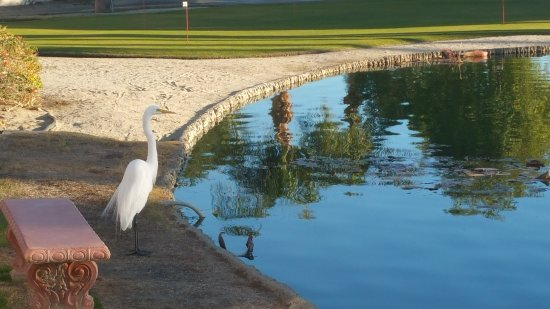Desert Breezes Resort: Heron visiting the pond...