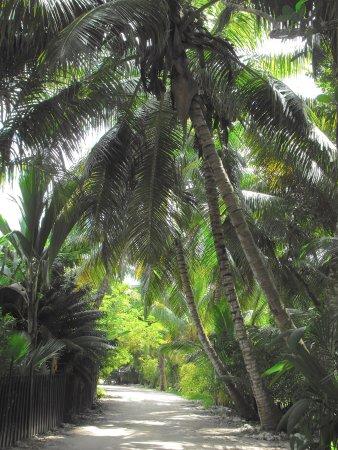 Praslin Island, Seychelles: Au bout l'Anse Lazio