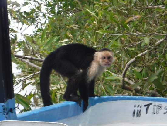 Quepos, Costa Rica: photo1.jpg