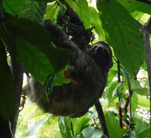 Quepos, Costa Rica: photo4.jpg