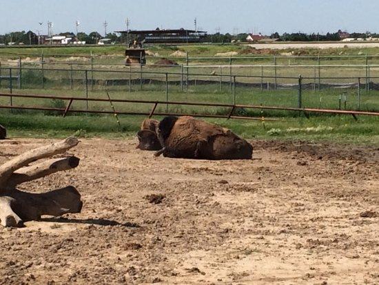 Dodge City Zoo: photo0.jpg