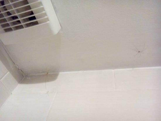 East Ayton, UK: spiders