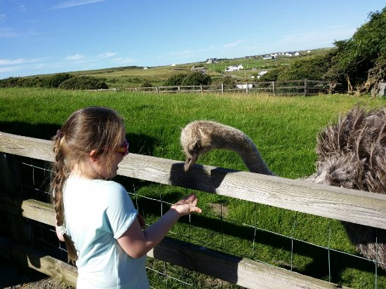 Liscannor, Irlanda: Moher Hill Open Farm