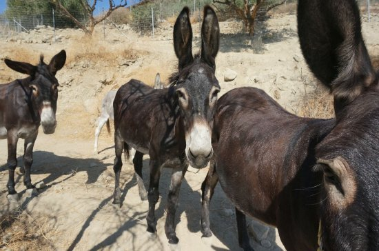 Walk With Donkeys