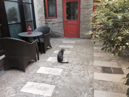 Hotel Cote Cour Beijing: resident cat